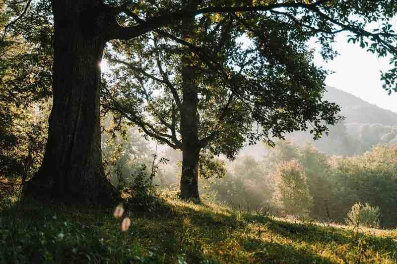Synevyr Wilderness-26188.jpg - © European Wilderness Society CC BY-NC-ND 4.0