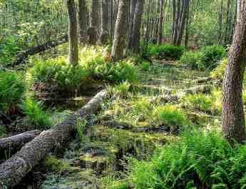 Bondarivske_Wetland -30673.JPG Andriy Sahayday 2019 - © All rights reserved