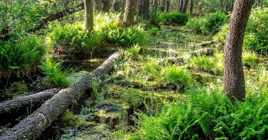Bondarivske_Wetland -30673.JPG - © European Wilderness Society CC BY-NC-ND 4.0