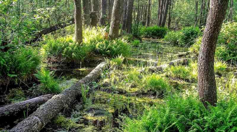 Bondarivske_Wetland -30673.JPG - © European Wilderness Society CC BY-NC-ND 4.0