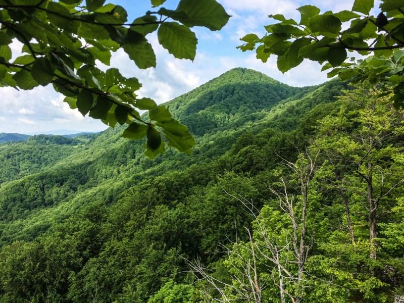 EWS - Uholka Velkya Wilderness -13024_.jpg