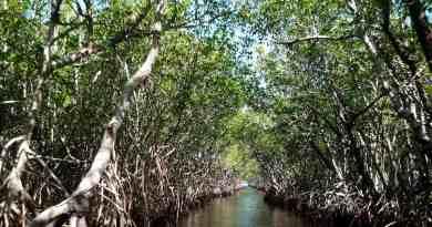 mangroves-105646.jpg Pixabay 2019 - © Pixabay