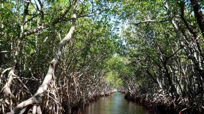 mangroves-105646.jpg - © Pixabay All Rights Reserved