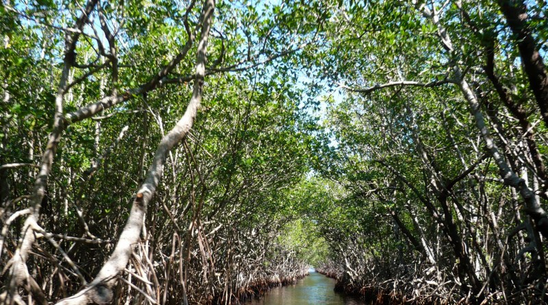 mangroves-105646.jpg - © Pixabay All Rights Reserved