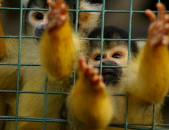 Behind the Coronavirus outbreak is wildlife trade