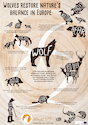 Wolves restore nature's balance in Europe