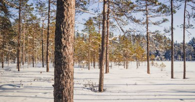 First ever 'Science National park' proposed in Finland