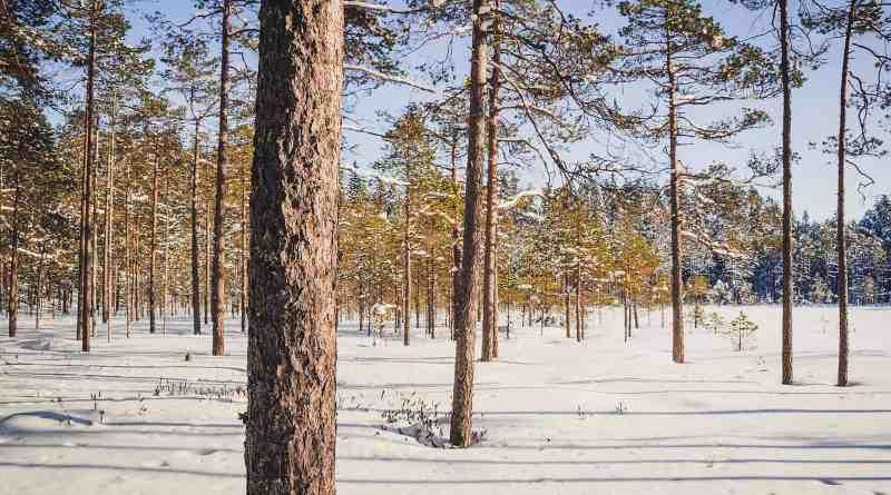 Kanta-Hämeen kuvapankki-31318.jpg - © European Wilderness Society CC BY-NC-ND 4.0