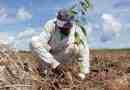 Planting seedlings - Black Jaguar Foundation