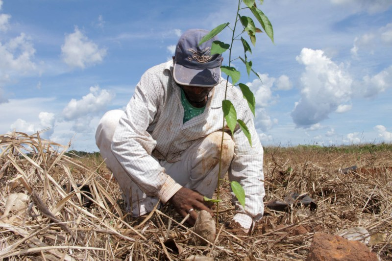Planting seedlings - Black Jaguar Foundation