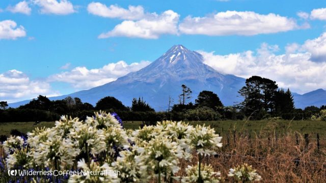 Mount Taranaki majestically rising up in the distance, North Island, New Zealand