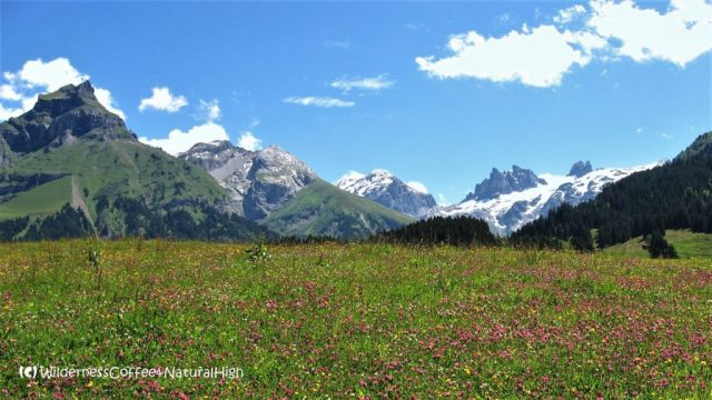 Flowery alpine meadows, Engelberg, Switzerland