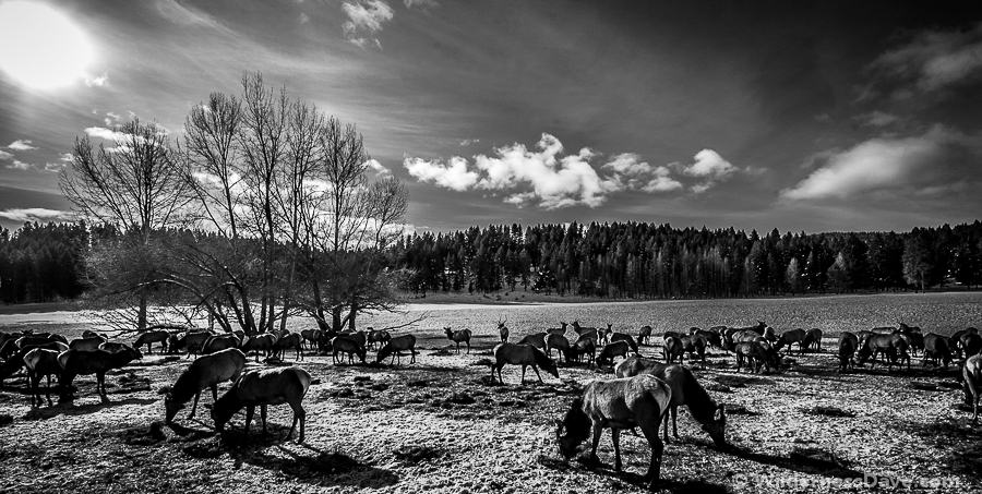 Elk Viewing in Baker, Oregon - processed image - photography