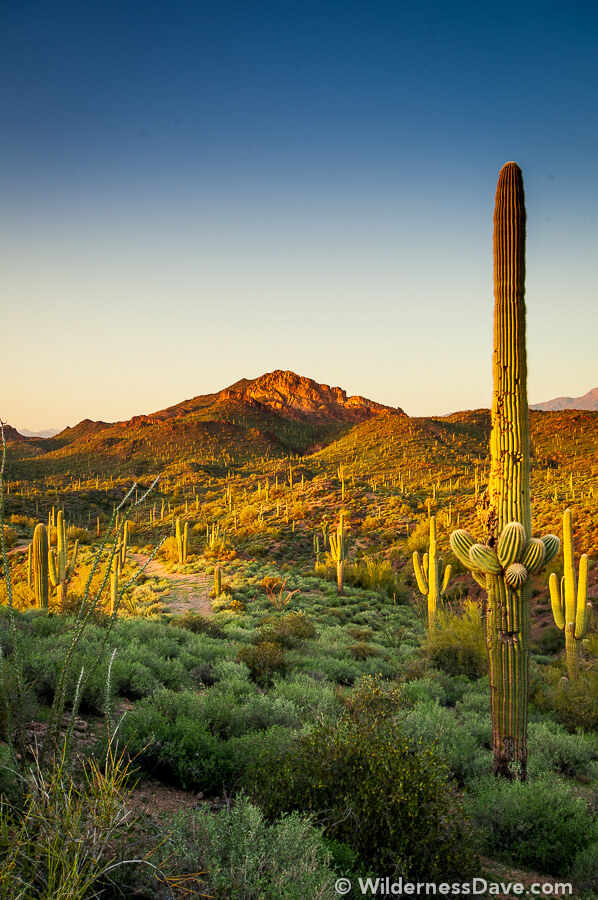 Photograph of the Week - Lost Dutchman