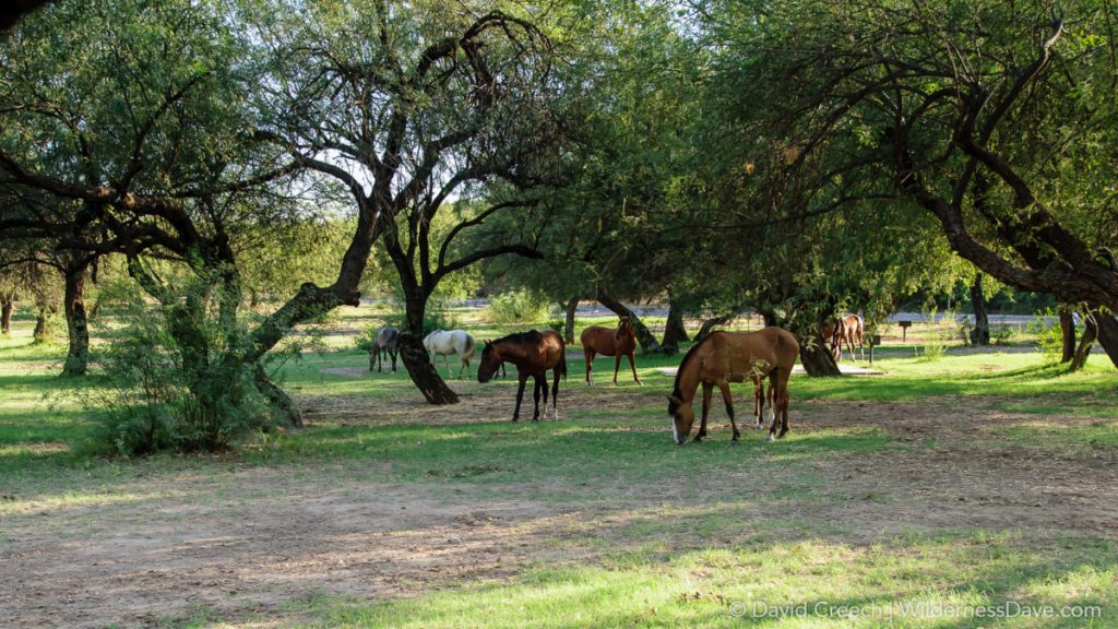 Wild Horses at Butcher Jones Recreation Area