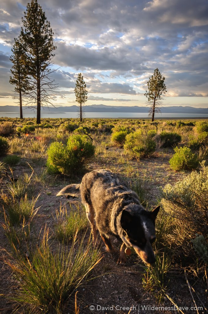 Mono Lake Camp with dogs