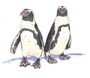 Penguin, ©Heidi Skiba