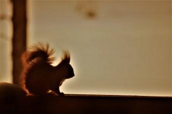 squirrel-in-winter-coat