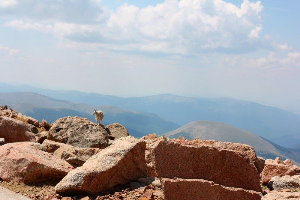Driving to Mount Evans (A road into the sky) (6/6)