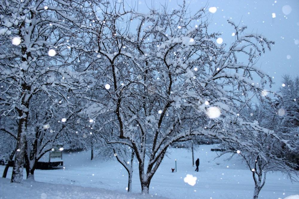 Minnesota Snow Fall December 2012 (2/6)