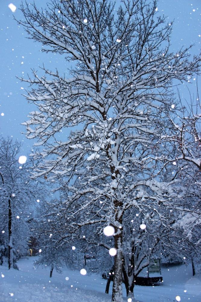 Minnesota Snow Fall December 2012 (5/6)