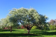 Crabapple Garden
