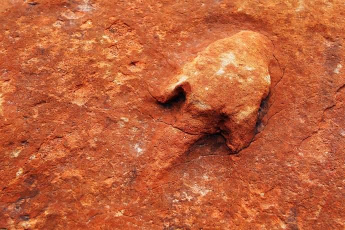 Dinosaur track in a sandstone boulder
