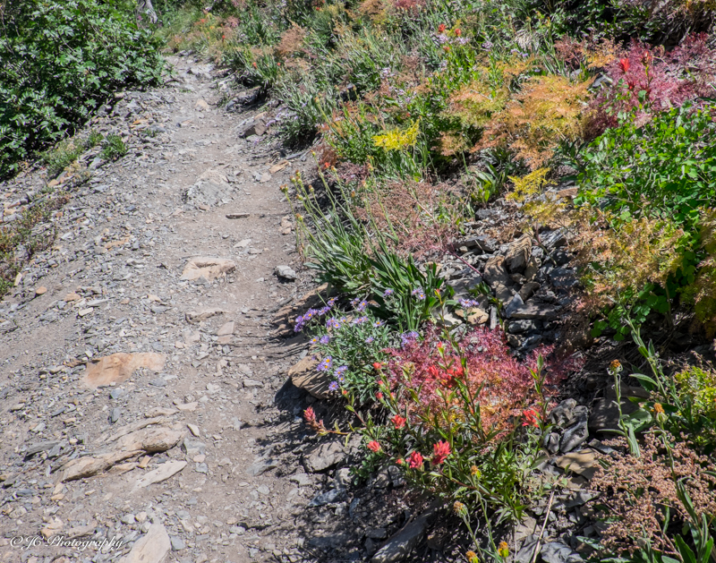 trail right-6133