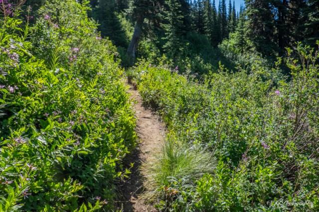 trail up begin-5992