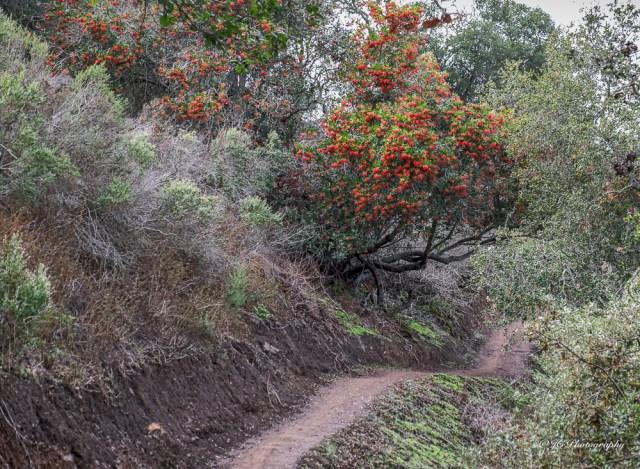 trail toyon-