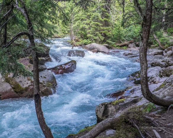 avalanche creek-9416
