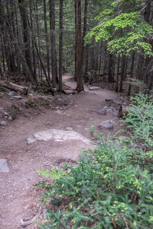 trail down-9348