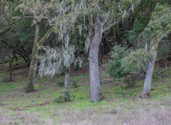 32-woods
