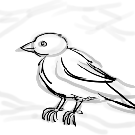 Fading the basic shapes and working up the finished sparrow outline