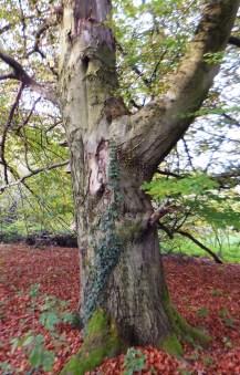 Sagenhafte Bäume