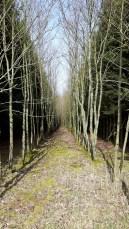 Menschgemachter Wald