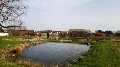 Ober-Moos