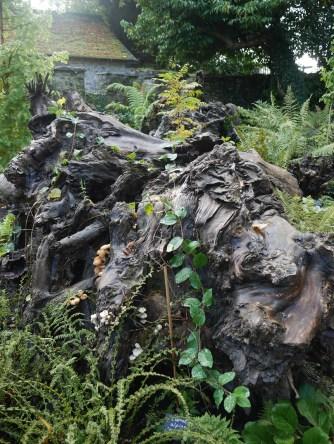Ein Baumstumpf / A stump in the stumpery