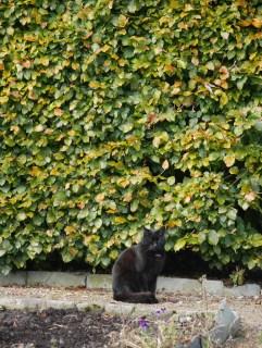 Die schmusefreudige Gartenkatze / The cuddly garden cat