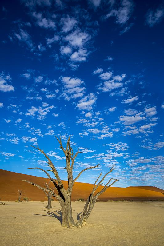 Wild Expressions Photo Tours & Safaris Namibia & Dead Vlei
