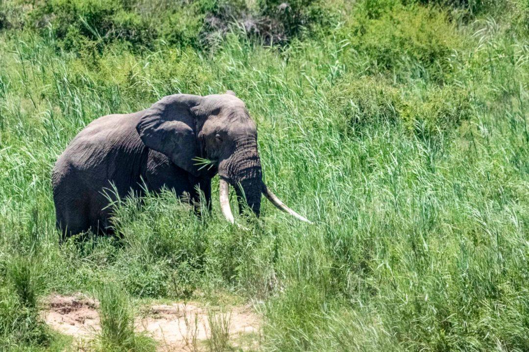Day Safari in Kruger National Park picture of a lichtenstein's hartebeest