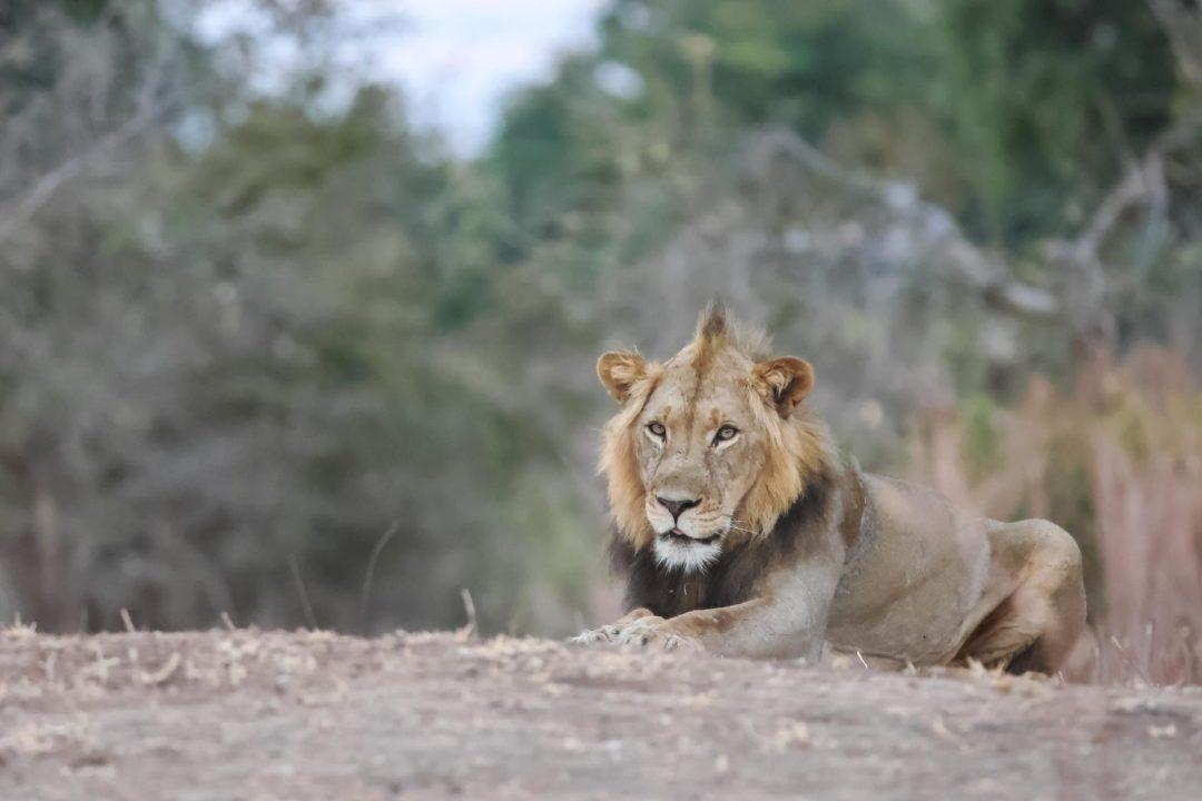 Mana Pools Safari
