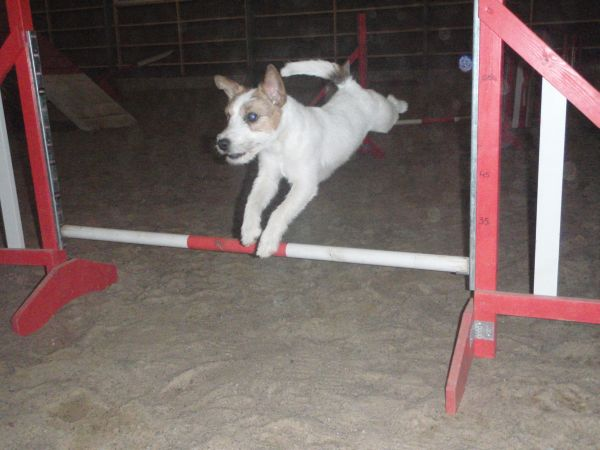 amos-agility-001