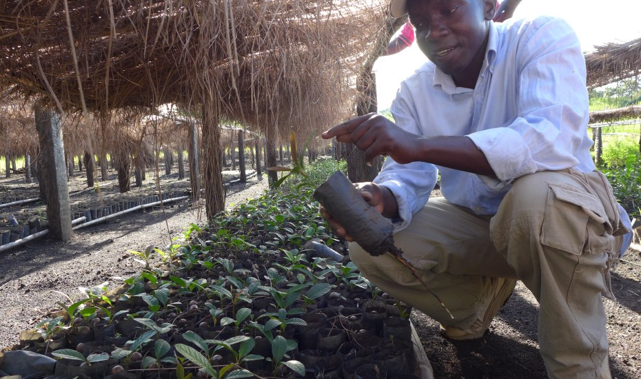 Lincoln Ocaya, the Forestry Program Manager for Wild Forests and Fauna's Native Seeds Project, at one of our native species nurseries in Gulu District, Uganda