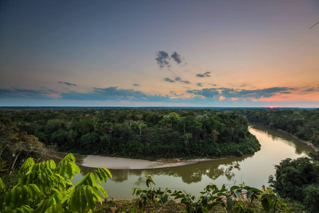 WildFF's ARCAmazon Project Site in Madre de Dios, Peru