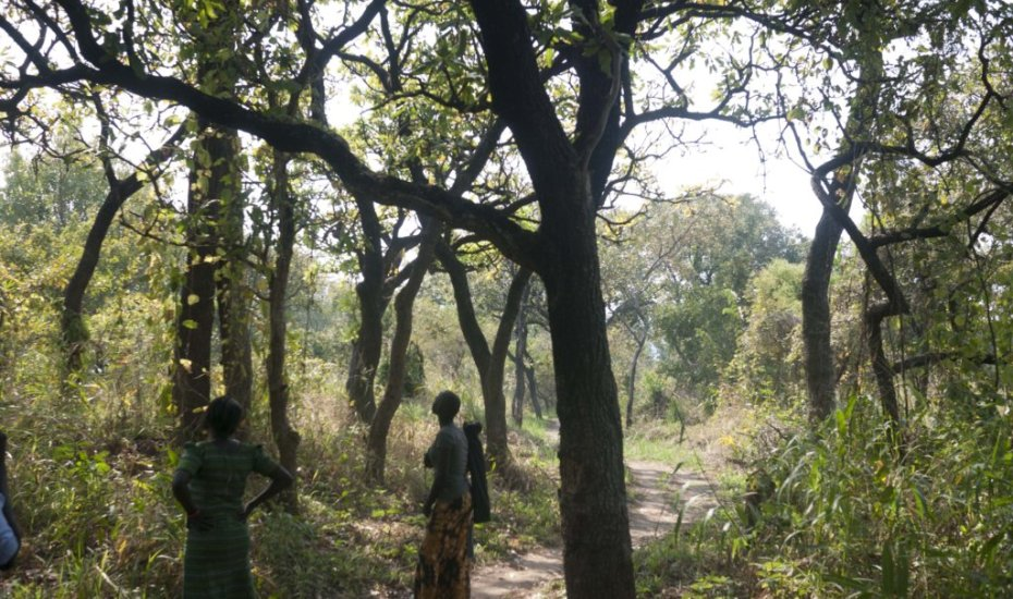 women collecting seeds in the forest
