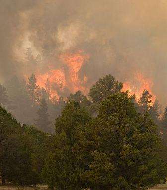 Wallow fire flames 6-8-2011