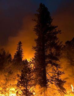 Little Bear Fire - June 13 Photo by Kari Greer-USFS