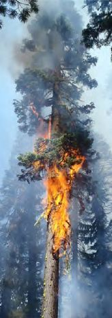 Reading Fire, torching tree