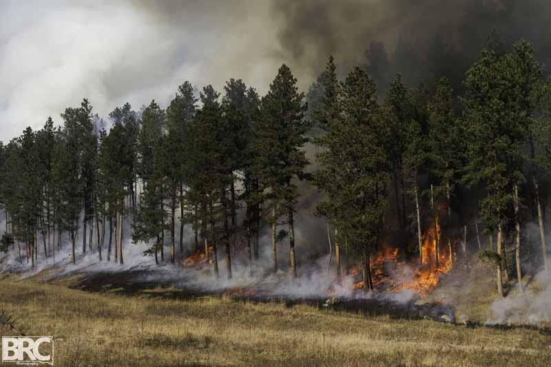 Whaley Gulch prescribed fire